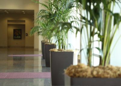 mc_lobby_plants